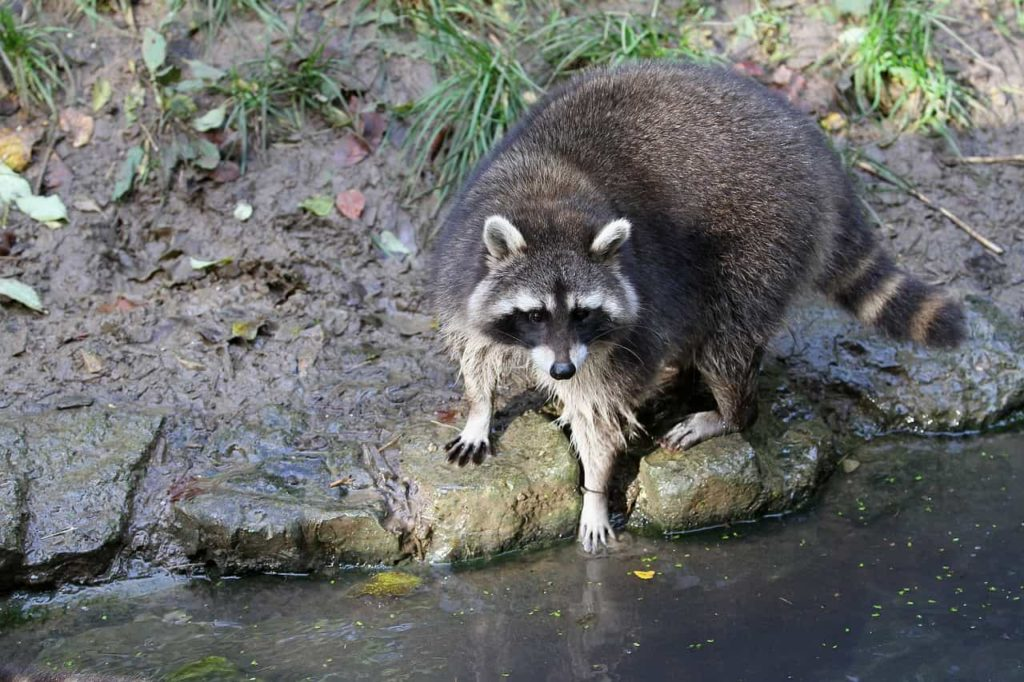 タスクを洗い出す動物