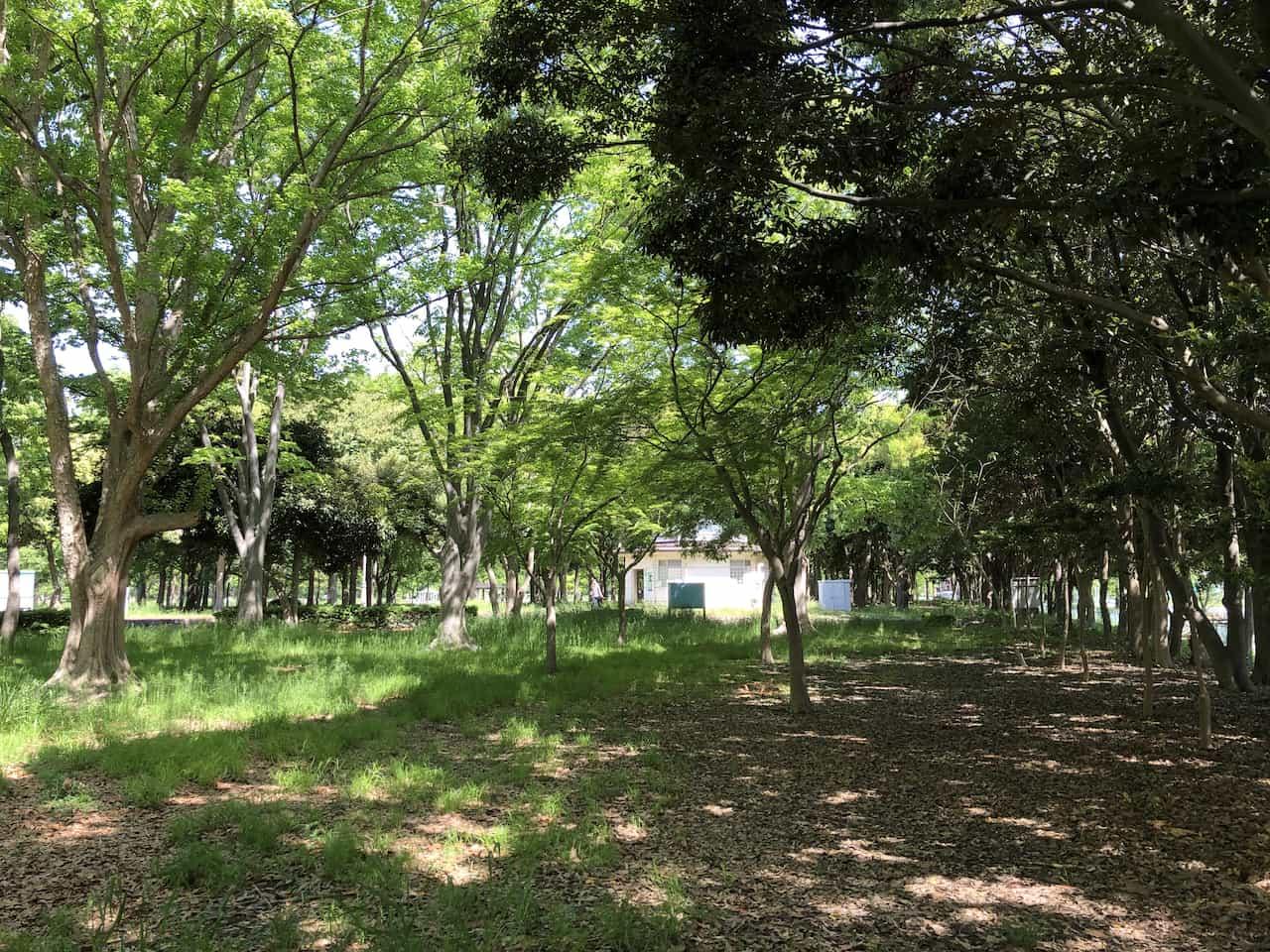 森の中で歩行瞑想